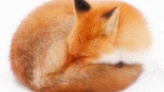Vimの手癖が出ても安心!Firefoxのアドオン「Shortkeys」